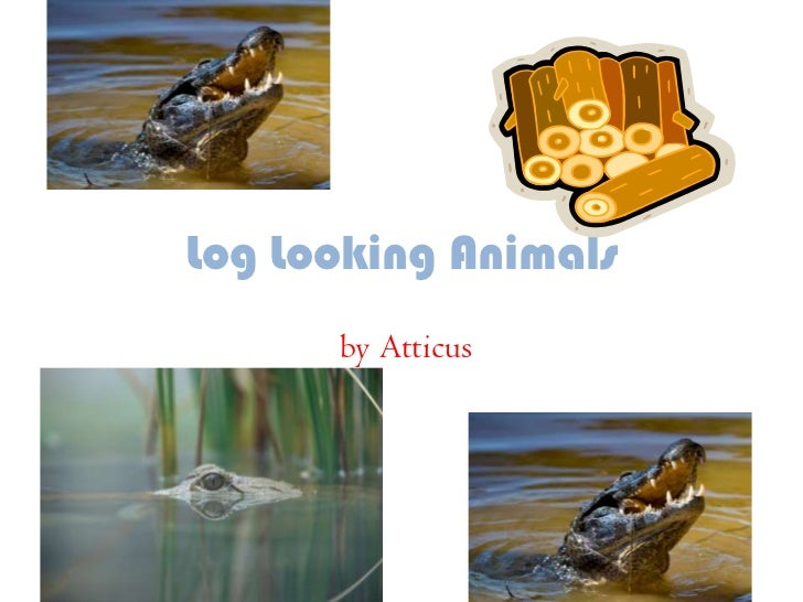Log Looking Animals<br />by Atticus<br />