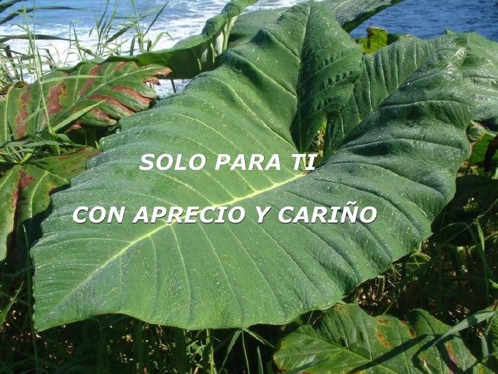 SOLO PARA TICON APRECIO Y CARIÑO              CARIÑO