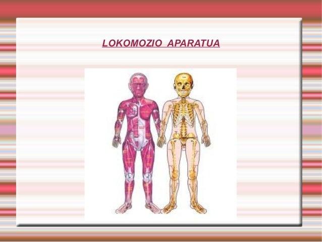 LOKOMOZIO APARATUA