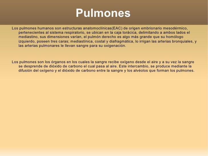 Pulmones <ul><li>Los pulmones humanos son estructuras anatomoclínicas(EAC) de origen embrionario mesodérmico, pertenecient...