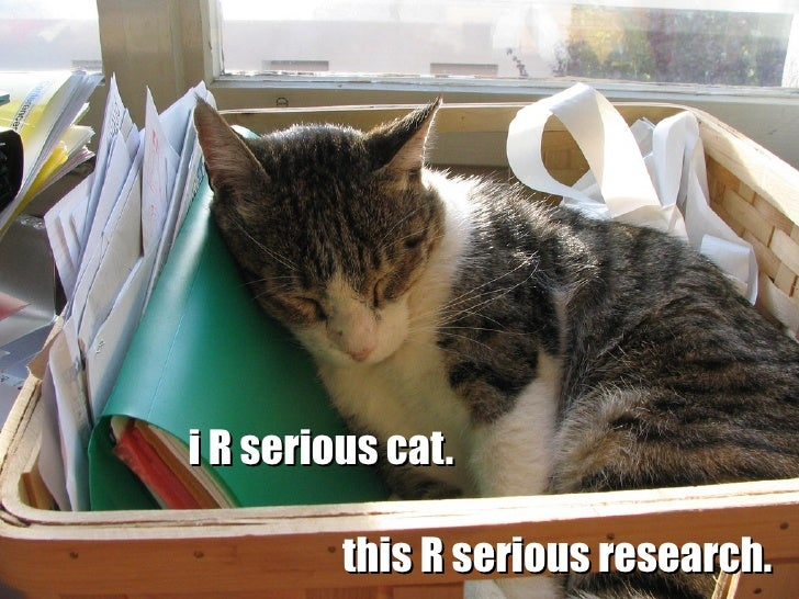 i R serious cat.           this R serious research.