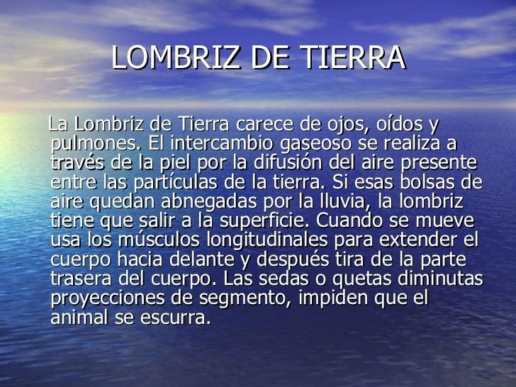 LOMBRIZ DE TIERRA <ul><li>La Lombriz de Tierra carece de ojos, oídos y pulmones. El intercambio gaseoso se realiza a travé...