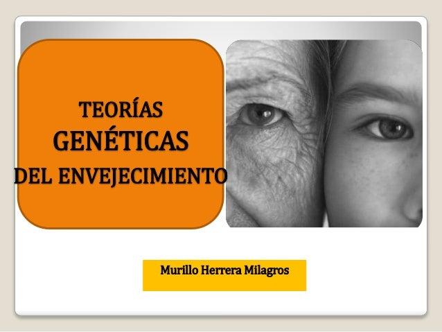 Murillo Herrera Milagros TEORÍAS GENÉTICAS DEL ENVEJECIMIENTO