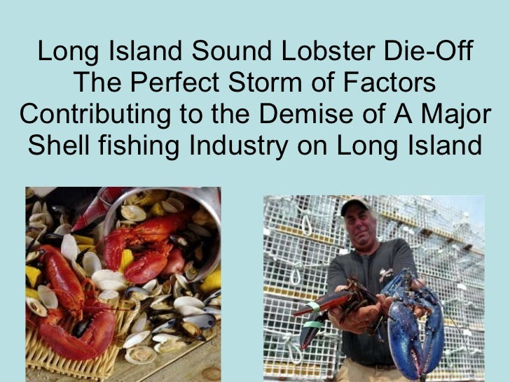 Long Island Sound Lobster Die-Off The Perfect Storm of Factors Contributing to the Demise of A Major Shell fishing Industr...