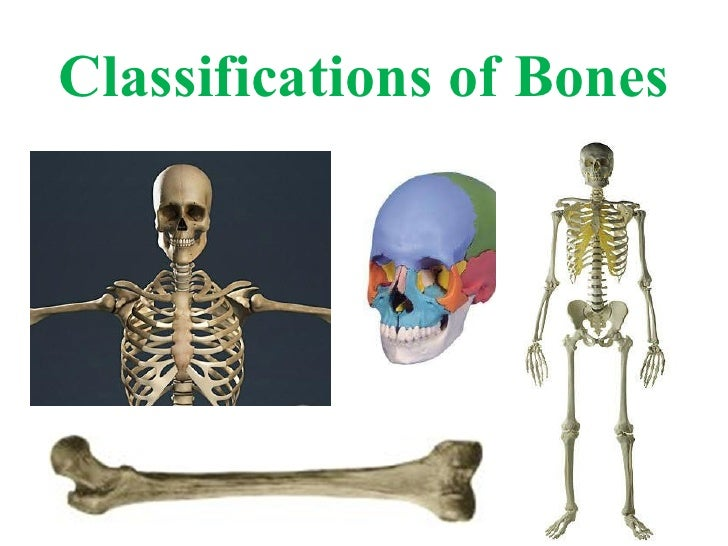 Classifications of Bones