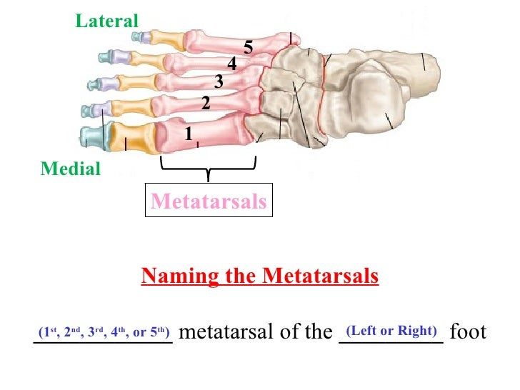 13563777 likewise Back Side Of Human Body Parts also Chapter 4 Abnormalities Of Movement And Posture Caused By Disease Of The Basal Ganglia likewise Pigpage as well Skull Labeled. on right lateral view of in labeled