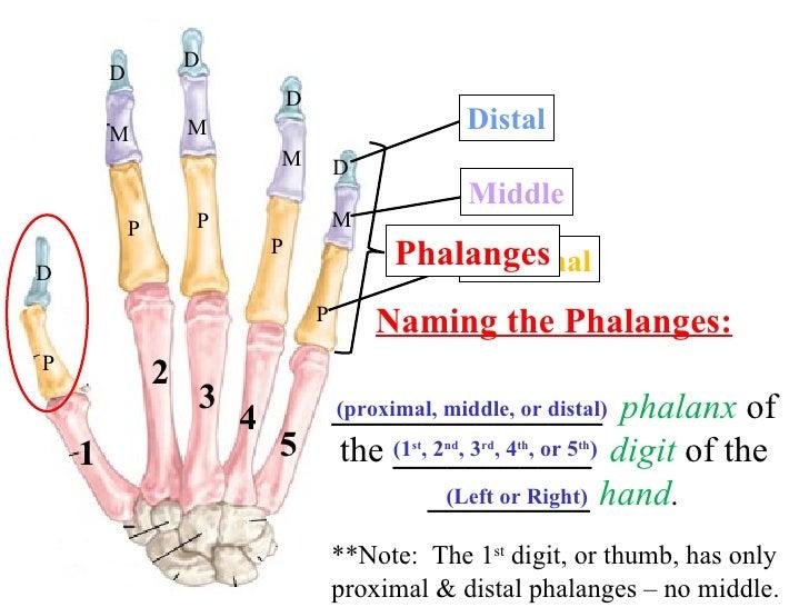 Image Gallery Hand Digit Numbers