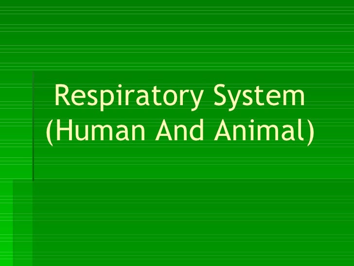 Respiratory System (Human And Animal)