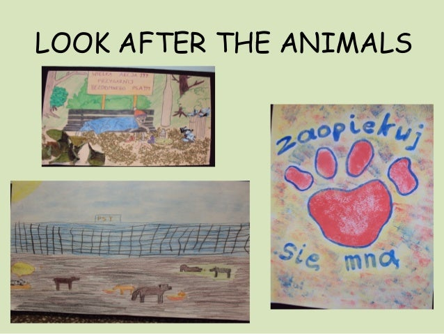 LOOK AFTER THE ANIMALS
