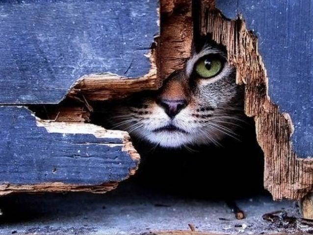 Look anywhere !