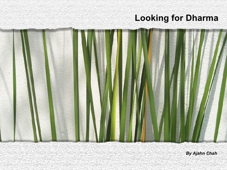 Looking For Dharma