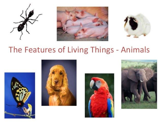 The Features of Living Things - Animals