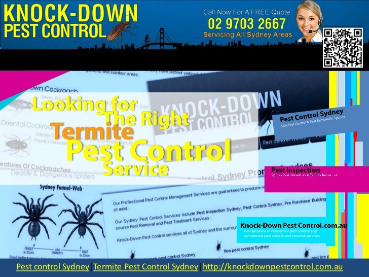 Pest Control Sydney - Looking For the Right Termite Pest Control Service