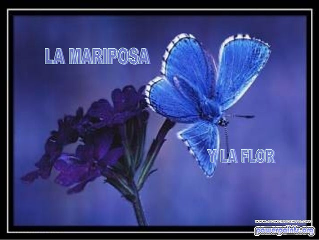 Cierta vez, un hombre pidió a DIOS una flor.... ....y una mariposa.