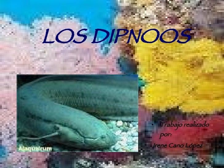 LOS DIPNOOS <ul><li>Trabajo realizado por: </li></ul><ul><li>Irene Cano López </li></ul>