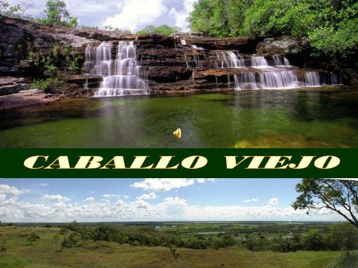 Los llanos son considerados como una de las      sabanas tropicales más ricas del mundo.  Este paisaje sabanero está abarr...