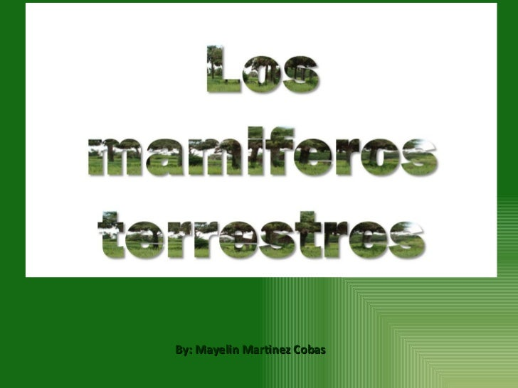 By: Mayelin Martinez Cobas