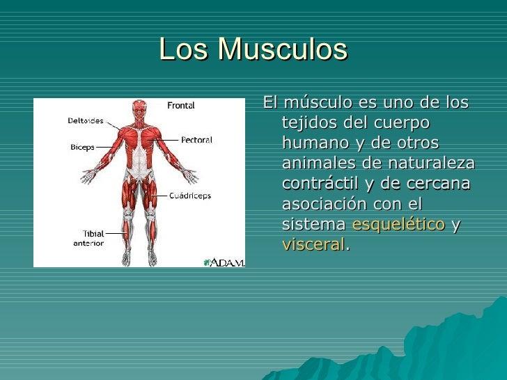 Los Musculos       El músculo es uno de los          tejidos del cuerpo          humano y de otros          animales de na...
