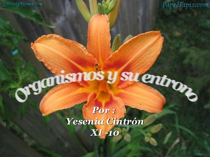 Organismos y  su entorno Organismos y su entrono Por :  Yesenia Cintrón XI -10