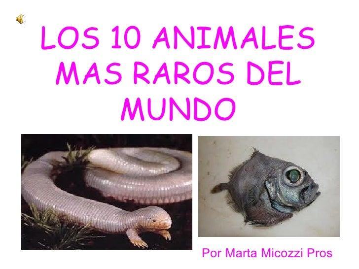LOS 10 ANIMALES MAS RAROS DEL     MUNDO        Por Marta Micozzi Pros