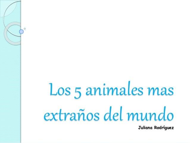 Los 5 animales mas  extraños del mundo  Juliana Rodríguez