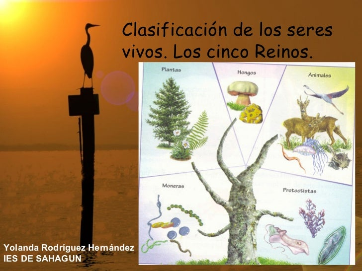 Clasificación de los seres vivos. Los cinco Reinos. Yolanda Rodríguez Hernández IES DE SAHAGUN