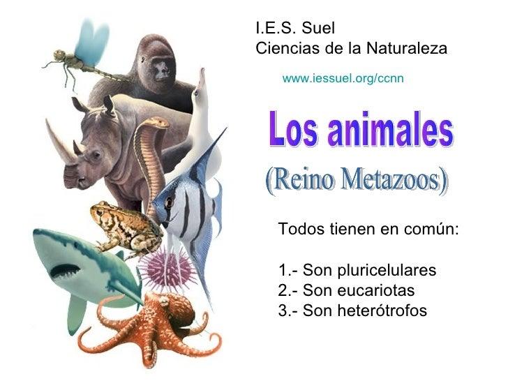 El reino animal