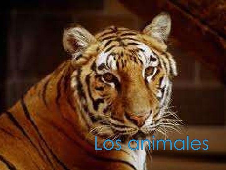    Los animales invertebrados son los que    no tienen un esqueleto interno con    columna vertebral. Algunos    inverteb...