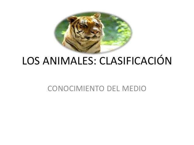 LOS ANIMALES: CLASIFICACIÓN    CONOCIMIENTO DEL MEDIO