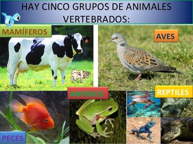 Resultado de imagen de los animales educacion primaria