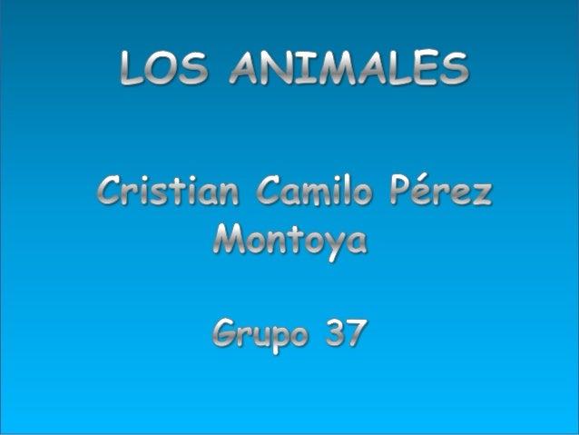 • Animales Salvajes • Animales Acuáticos • Animales Domésticos • Animales Silvestres