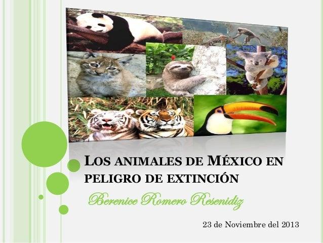 LOS ANIMALES DE MÉXICO EN PELIGRO DE EXTINCIÓN  Berenice Romero Resenidiz 23 de Noviembre del 2013