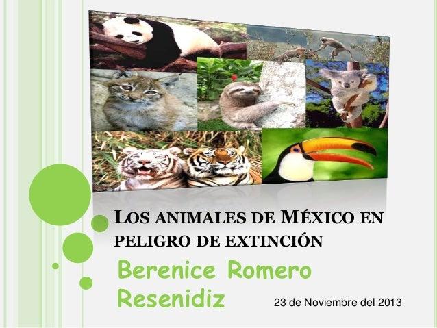 LOS ANIMALES DE MÉXICO EN PELIGRO DE EXTINCIÓN  Berenice Romero 23 de Noviembre del 2013 Resenidiz