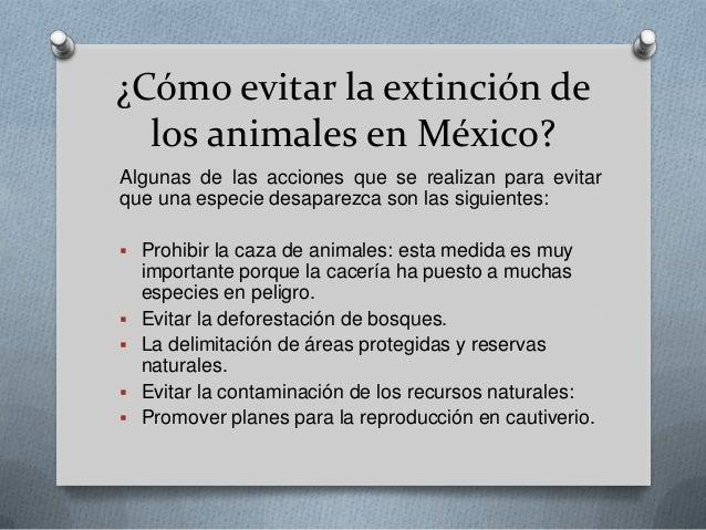 Los animales de m xico en peligro de extinci n - Como evitar los ratones ...