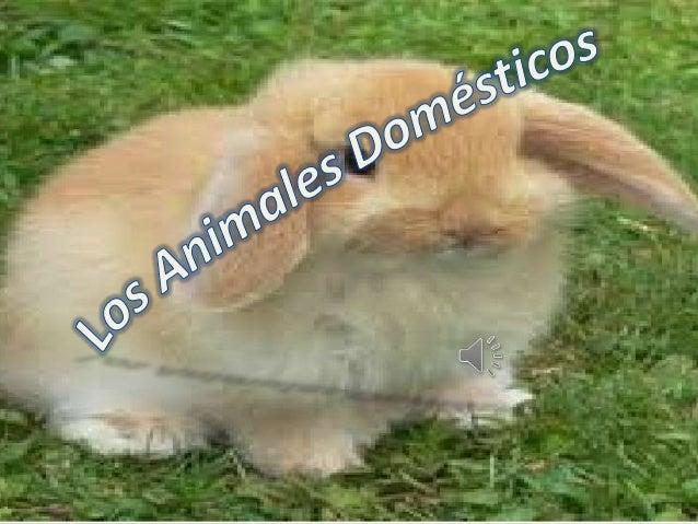 Los animales domésticos son pequeños ograndes animales que pueden llegar a serdomesticados por el hombre y, por tanto,conv...