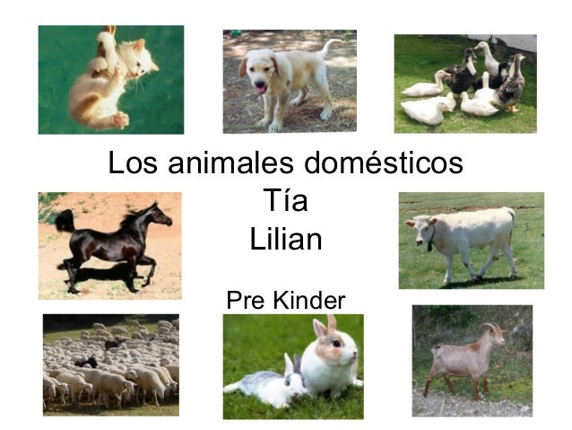 Los animales domésticos Tía Lilian Pre Kinder