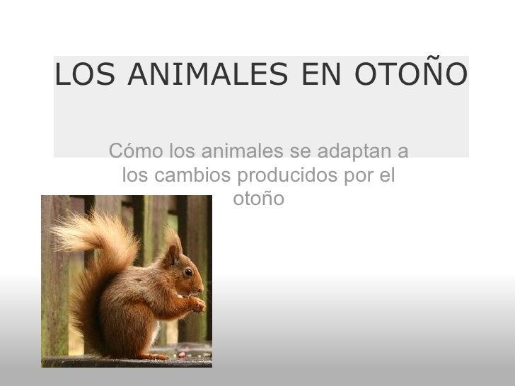 LOS ANIMALES EN OTOÑO Cómo los animales se adaptan a los cambios producidos por el otoño