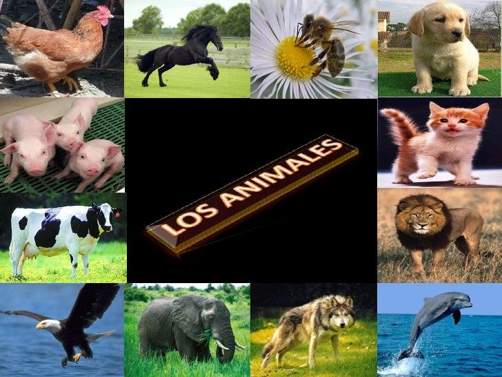 Los animales loteria