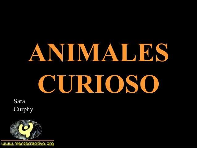 ANIMALESANIMALESCURIOSOCURIOSOSaraCurphy