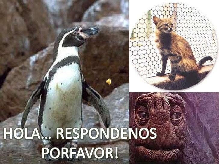 HOLA… RESPONDENOS<br />PORFAVOR!<br />