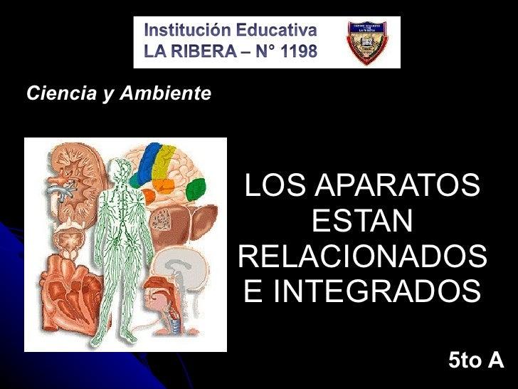 LOS APARATOS ESTAN RELACIONADOS E INTEGRADOS 5to A Ciencia y Ambiente