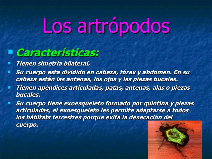 Los artrópodos <ul><li>Características: </li></ul><ul><li>Tienen simetría bilateral. </li></ul><ul><li>Su cuerpo esta divi...