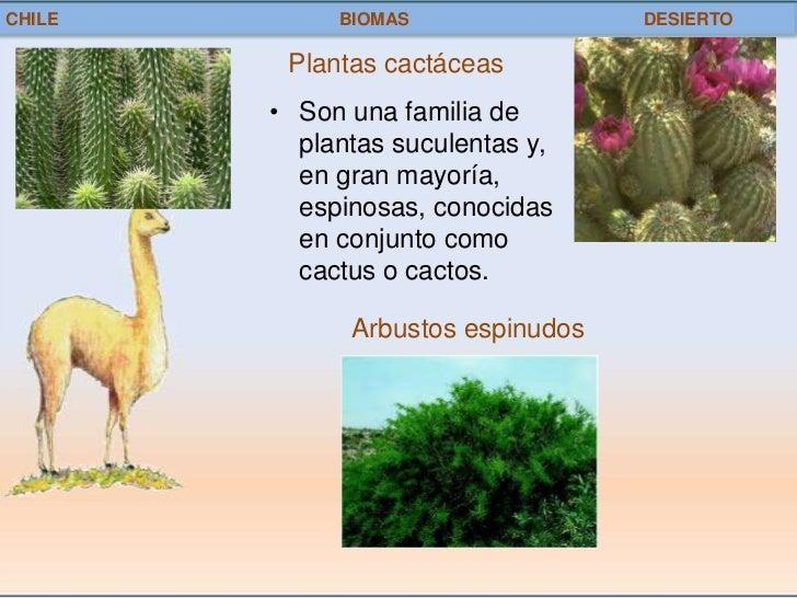 chile biomas desierto plantas cactáceas son una familia de plantas