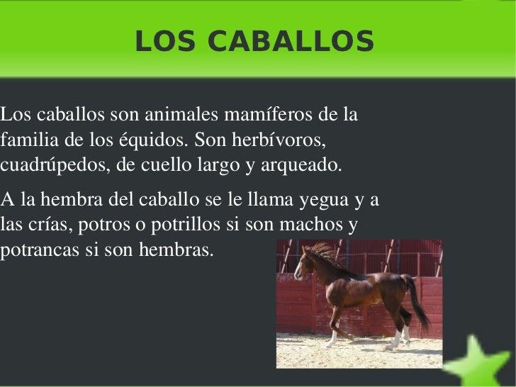 LOS CABALLOS <ul><li>Los caballos son animales mamíferos de la familia de los équidos. Son herbívoros, cuadrúpedos, de cue...