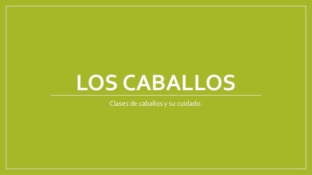 LOS CABALLOS Clases de caballos y su cuidado.