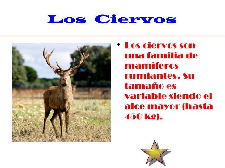 Los Ciervos              Los ciervos son         una familia de         mamìferos         rumiantes. Su         tamaño es...