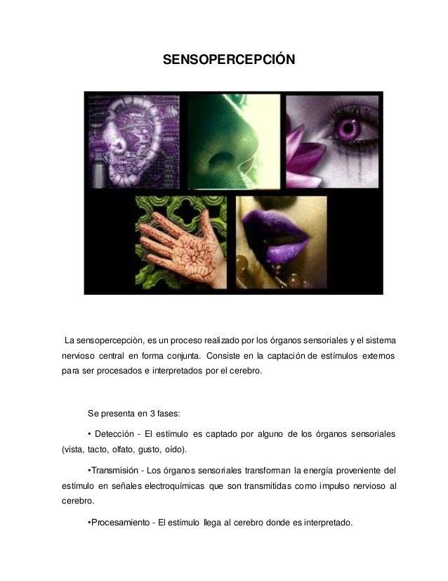 Los cinco sentidos del cuerpo humano for Mural de los 5 sentidos