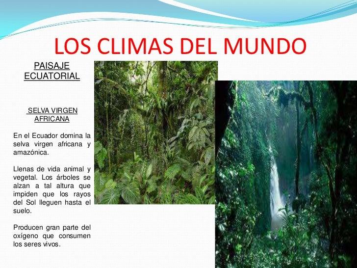 LOS CLIMAS DEL MUNDO     PAISAJE   ECUATORIAL    SELVA VIRGEN     AFRICANAEn el Ecuador domina laselva virgen africana yam...