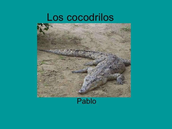 Los cocodrilos Pablo