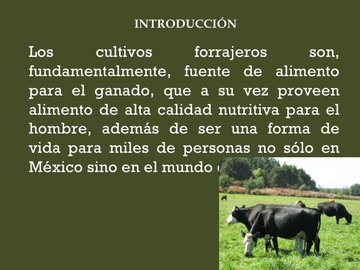 INTRODUCCIÓNLos     cultivos      forrajeros      son,fundamentalmente, fuente de alimentopara el ganado, que a su vez pro...